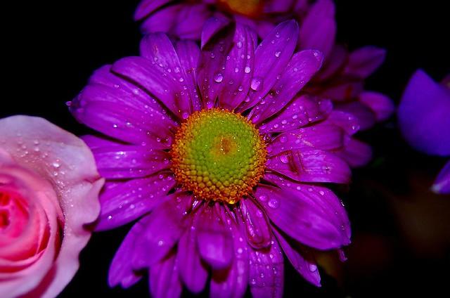funeral flower 1