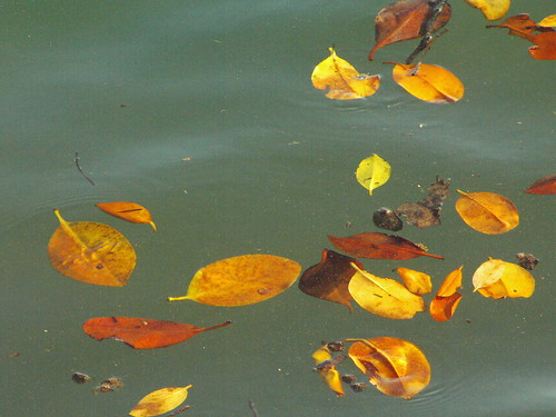 leaves and water 1