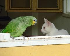 Tranquilino y Petronila (Motica)
