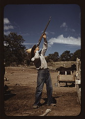Mr. Leatherman, homesteader, shooting hawks which have been carrying away his chickens, Pie Town, New Mexico (LOC)