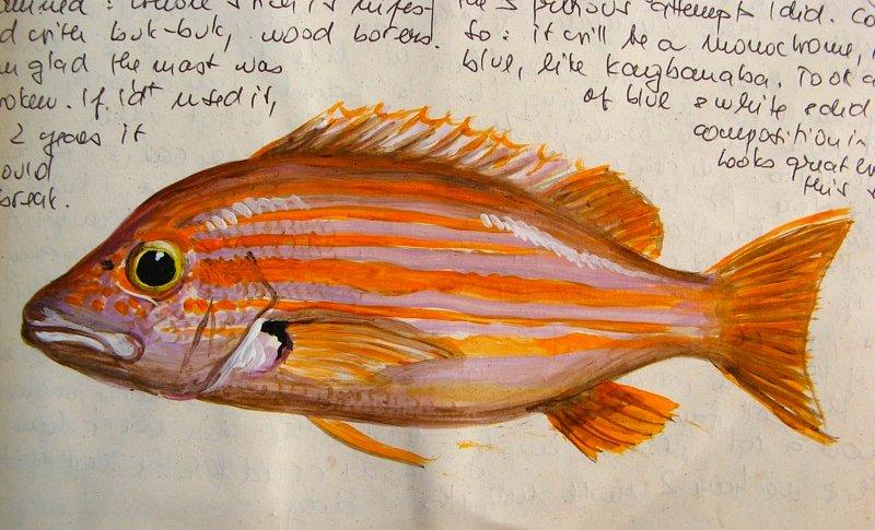 orange fish (!?)