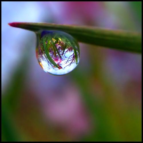 Garry Oak Ecosystem in a Dewdrop
