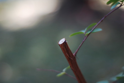 Pruned