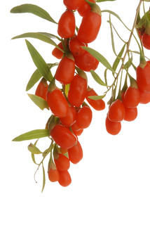 NingXia berries on branch 2