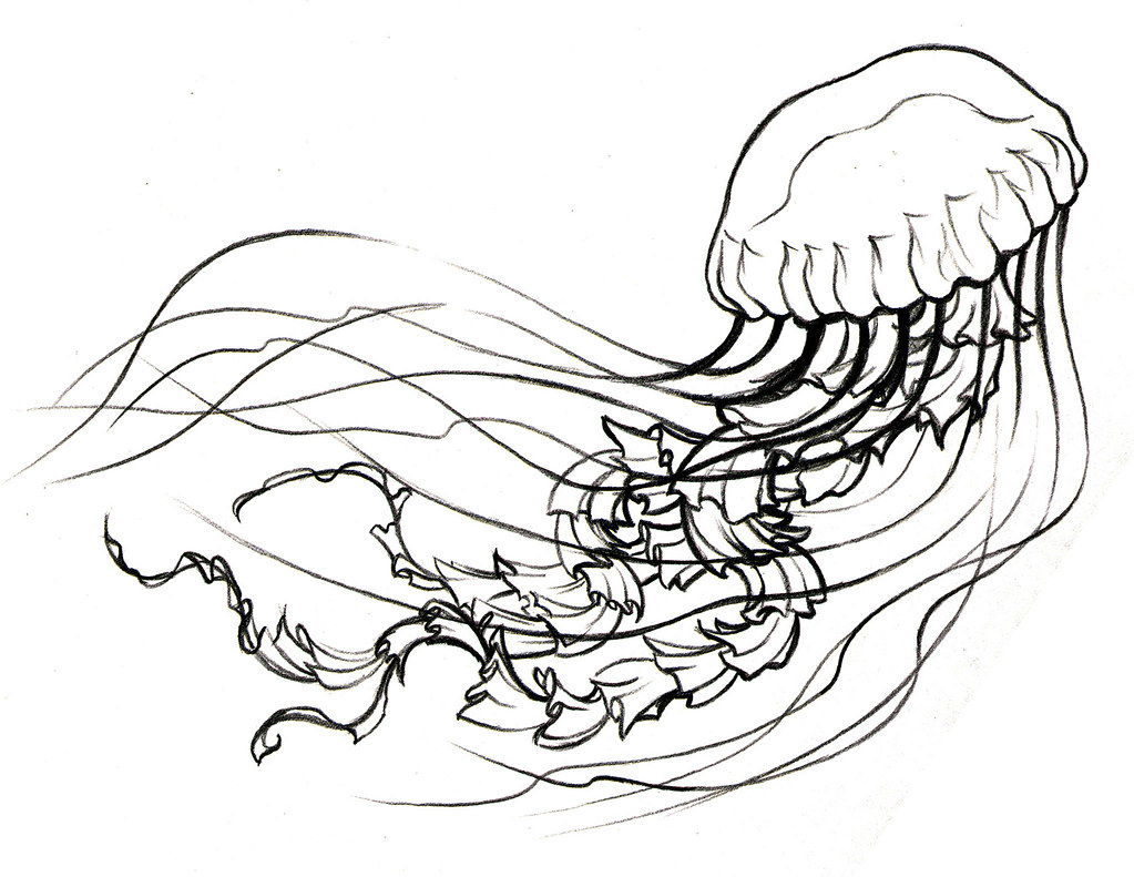 more b jellyfish colouring pages page 2