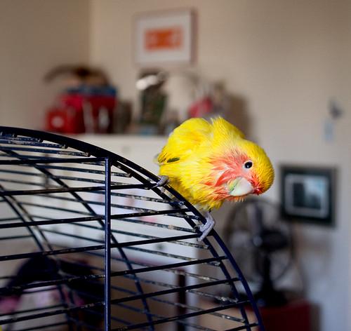 Bird bath aftermath