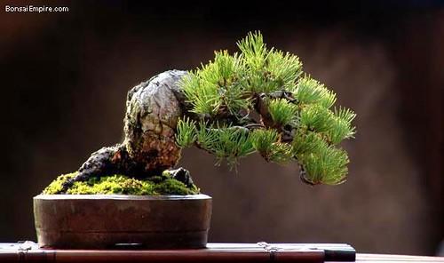 top-bonsai-gallery-l-11