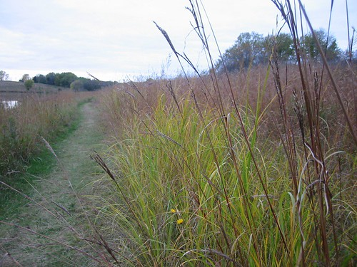 blue mounds grasses