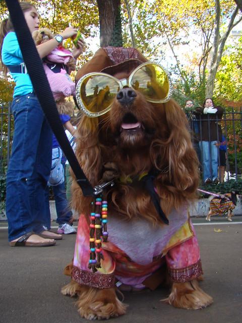 Hippie Dog Hippie Dog Carl Schurz Park Annual Halloween