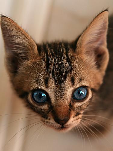 Abandoned litle cat