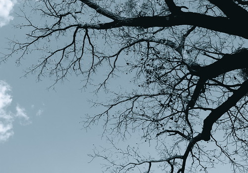 Creepy walnut tree. Photo copyright Jen Baker/Liberty Images; all rights reserved.