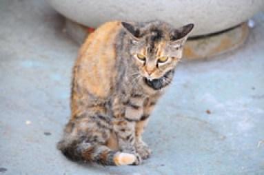 Aggressive Cat Behavior - defensive cat