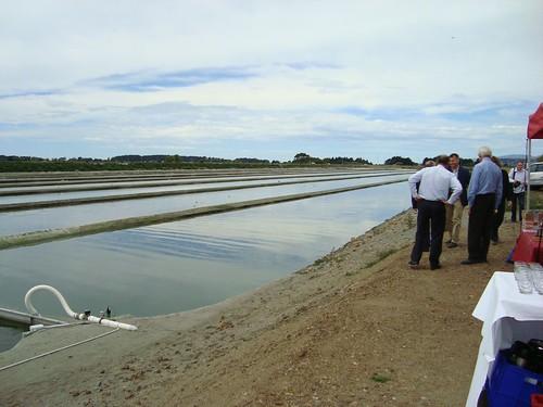 Solray Algae to Biofuels opening 23