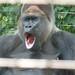 Zoo 577
