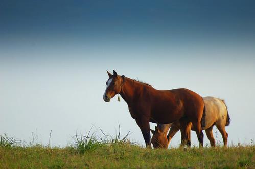 el caballo el malo