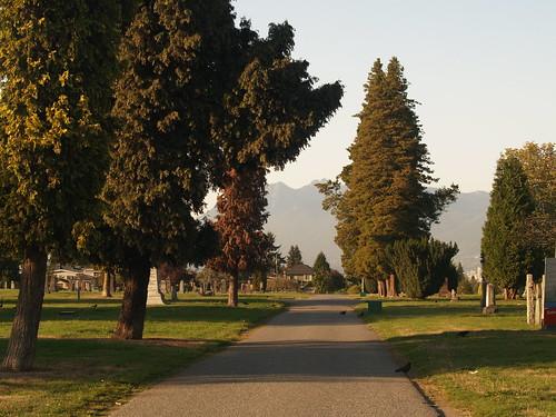 Mountainview 3