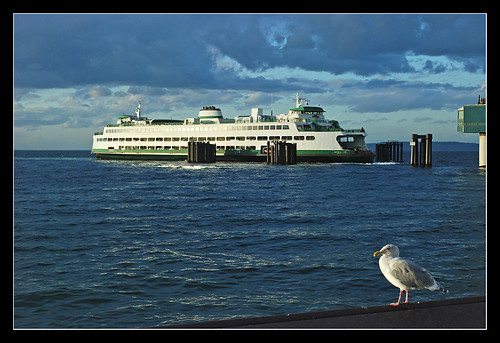 Ferry and seagull - Edmonds, Washington
