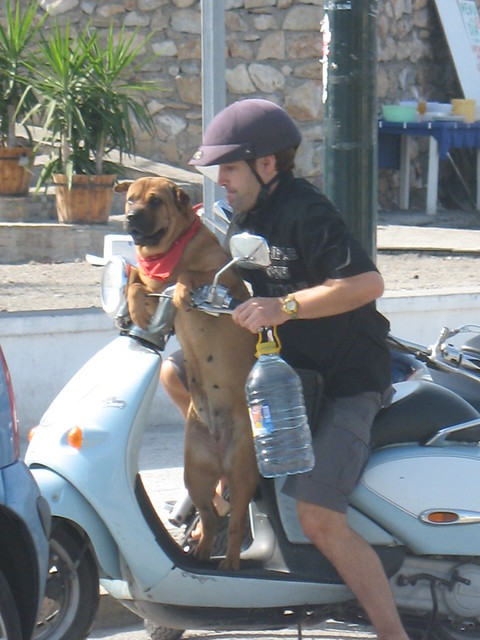 A dog, his man and his scooter
