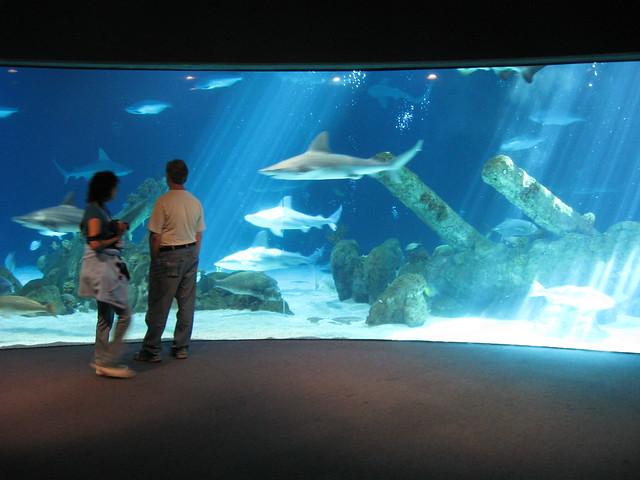 Aquarium Albuquerque Logo