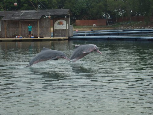 200907240681_pink-dolphin-show
