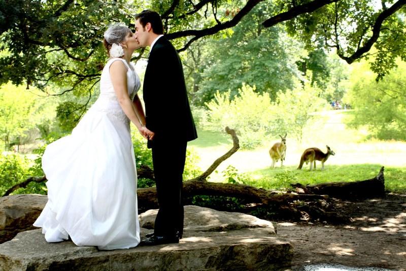 Kissing by the Kangaroos