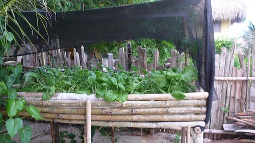 Otra huerta. Gracias a los talleres de la ONG que pasó por allí.