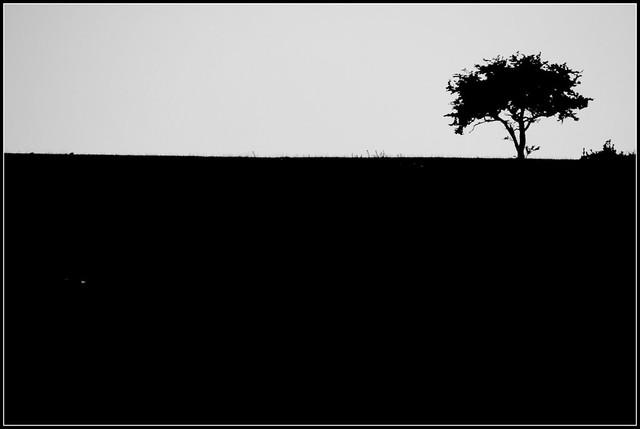 The tree