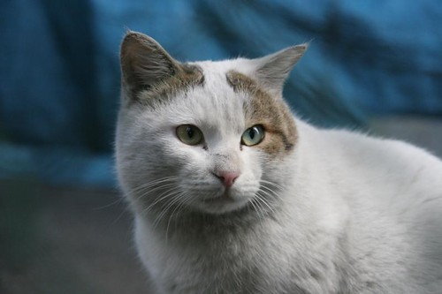 Cat@Kawasaki