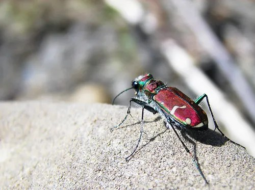 Top 10 Useful Insects You Want Invading Your Garden (4/6)