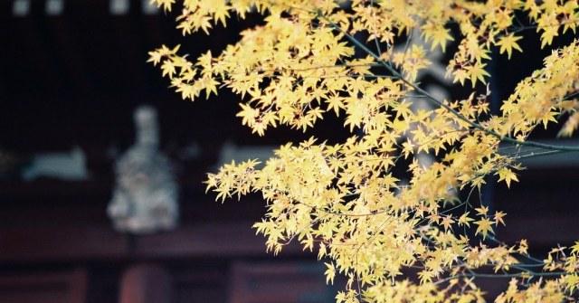 もみじ 2009/12/01 FM2_043_0036