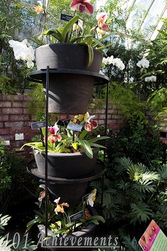 Phipps Orchid & Bonsai Show