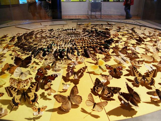 Fenología de insectos ibéricos