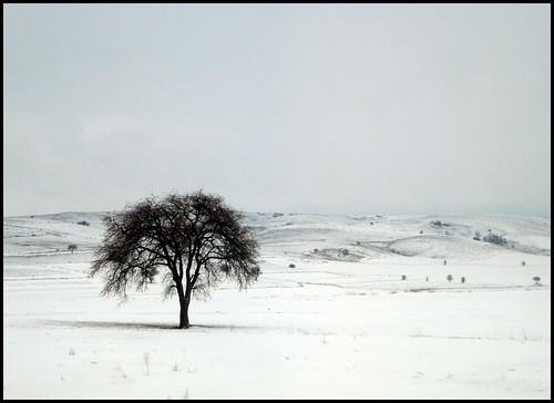 Arbre en un paisatge nevat // Tree in a White Scenery