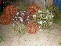 natural forest globes