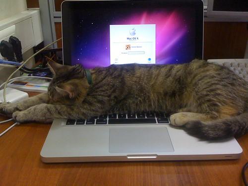 Cats Love Macs, too ;)