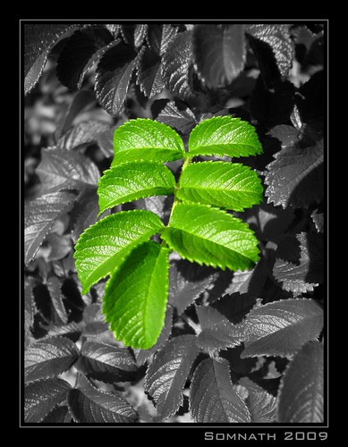 Green Beauty by Somnath Mukherjee Photoghaphy