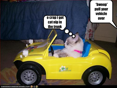 funny-pictures-cat-gets-pulled-over