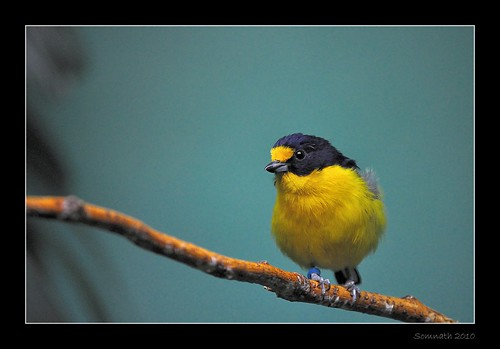 Untitled by Somnath Mukherjee Photoghaphy