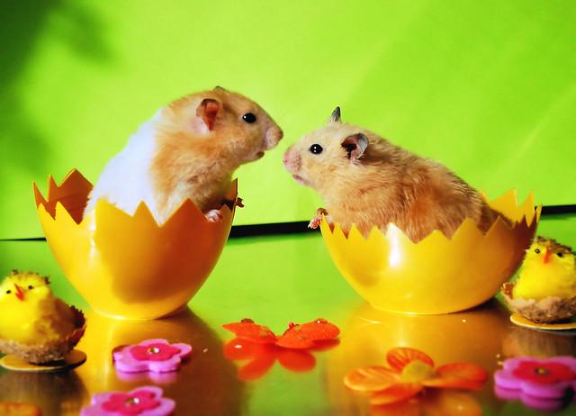 Easter love? ~ Kokosanka & Migotka