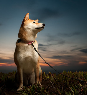 photograph of a dog using fill flash