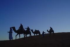 Camelos no deserto de Marrocos