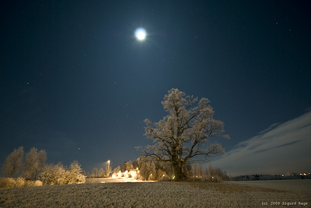 Full Moon over the Oak