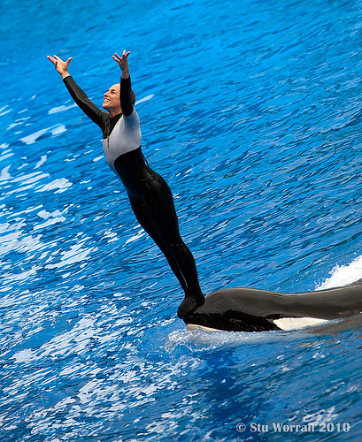 Seaworld Trainer - Dawn Brancheau