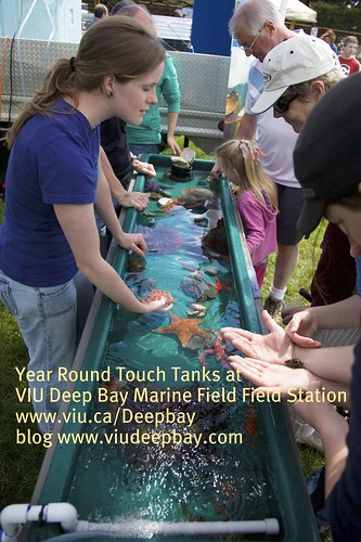 BC Shellfish Festival Touch Tank