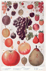 Fruit page 1214-1215 by perpetualplum