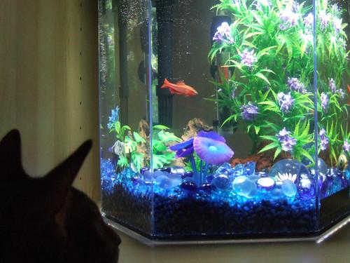 jake-fish3069