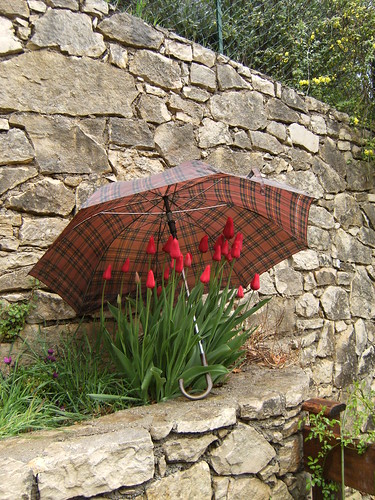 red tulips with umbrella