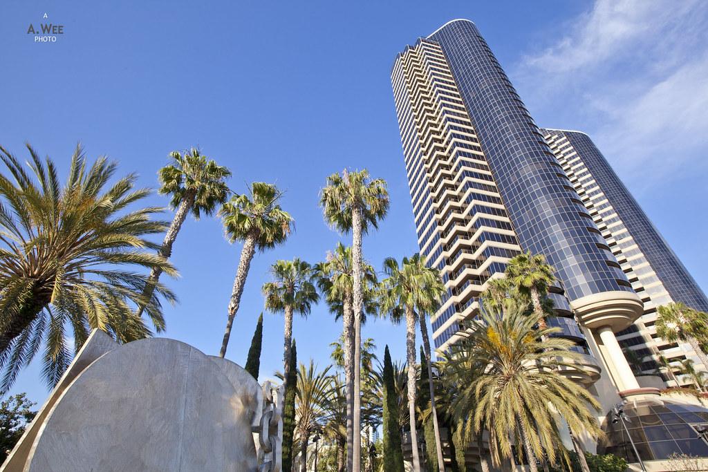 Palm Trees and Condominium
