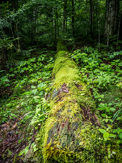 Moss Covered Log at Hills Creek Falls