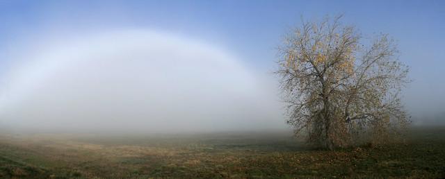 the fog-bow